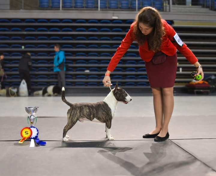 25.03.2018 Tallinn National Dog Show