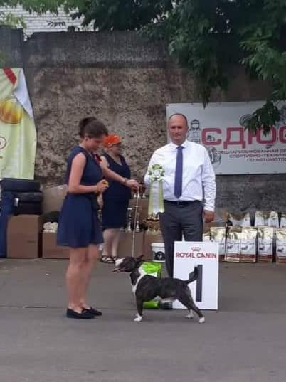 24.05.2018 Special bull terrier show